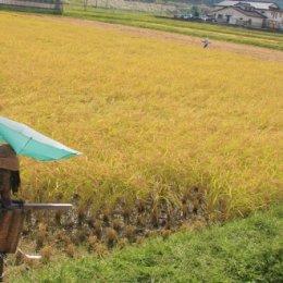 【10名限定!】稲刈り体験インターンの募集