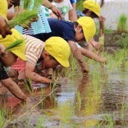 子どももお米もぐんぐん育つ!つくばどろんこ保育園