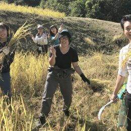 お米大好き!な職員たちが参加する稲刈りレポート