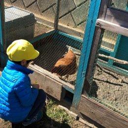 飼育した鶏をさばき、食す。「命をいただく会」で子どもたちが体験できること