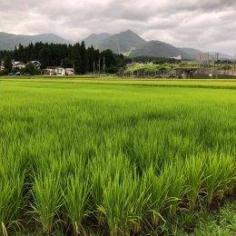 8月の田んぼ