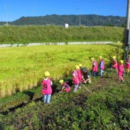 2018年 どろんこ米 稲刈り体験ツアーレポート