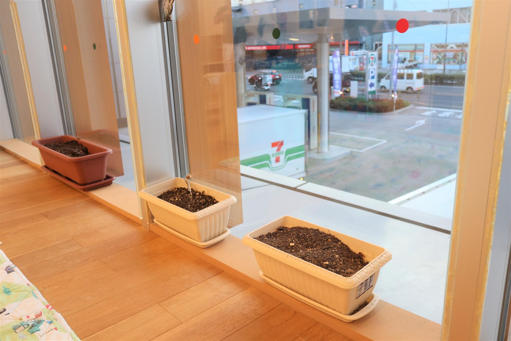 窓辺にあるプランターのミニ菜園