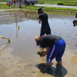 南魚沼で職員自ら田植え 体験と学び溢れる農業研修「MTM48」