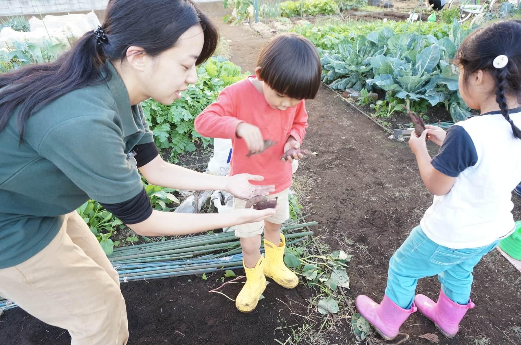 掘ったさつまいもの大きさ比べをする子ども