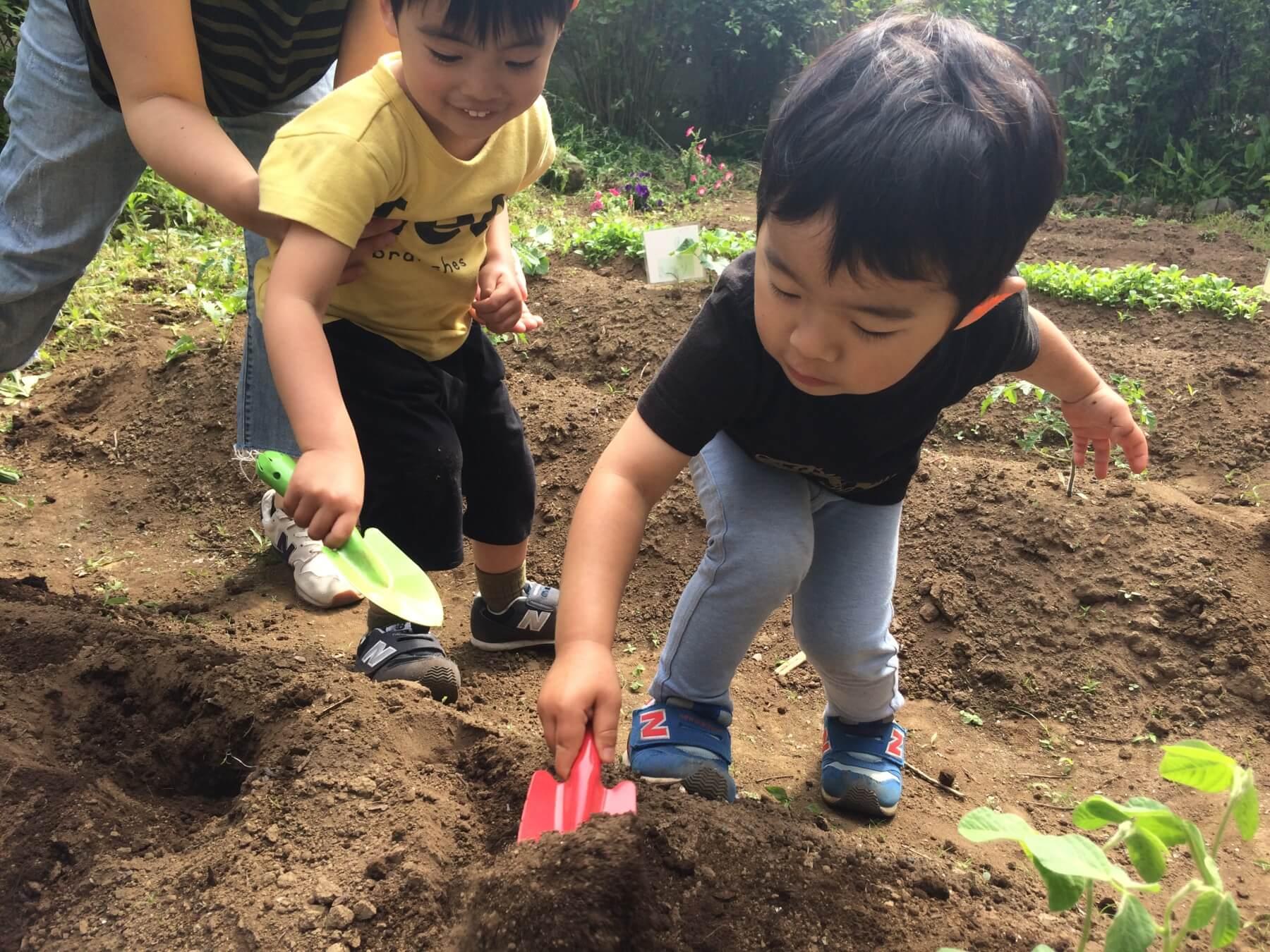 スコップで畑を耕し始める子供達