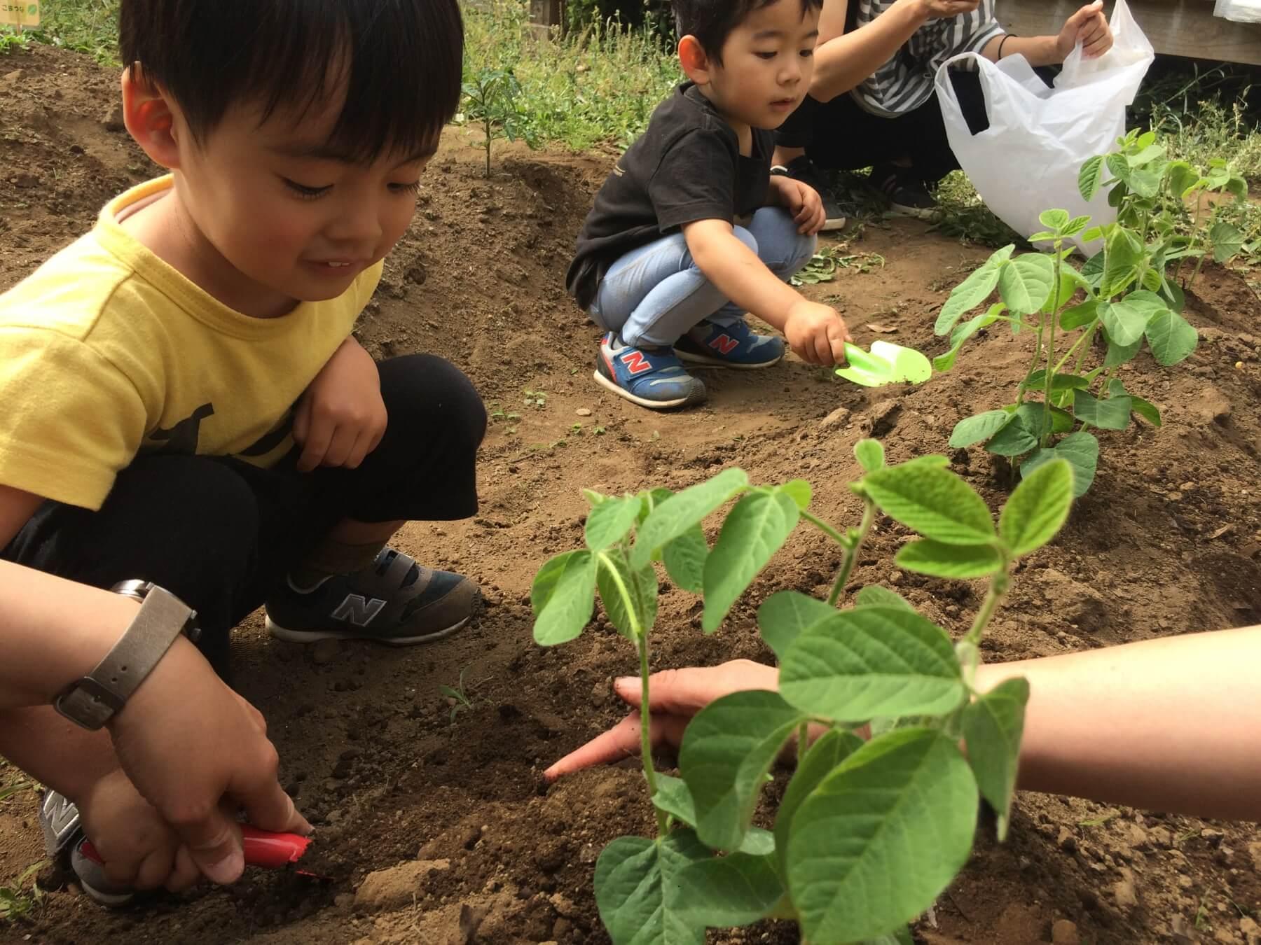 苗を植える子供達