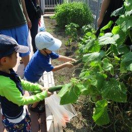 発達支援つむぎ横浜東口ルームの畑活動(7月)