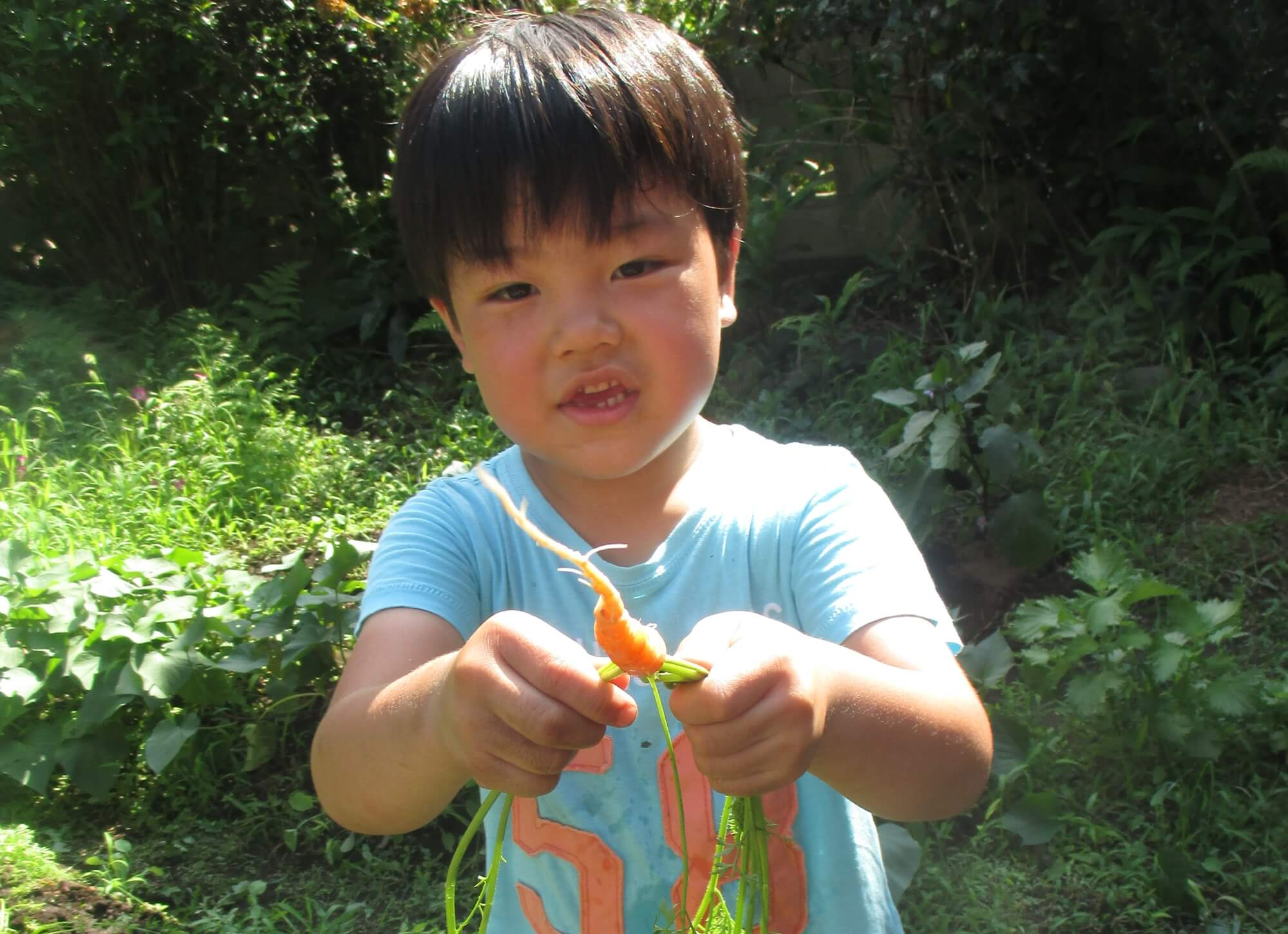 葉付き人参を収穫する子ども