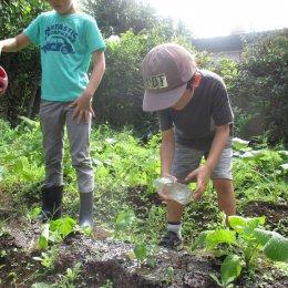 阿佐ヶ谷ルームの畑日記「みんなの野菜、おおきくなったかな」