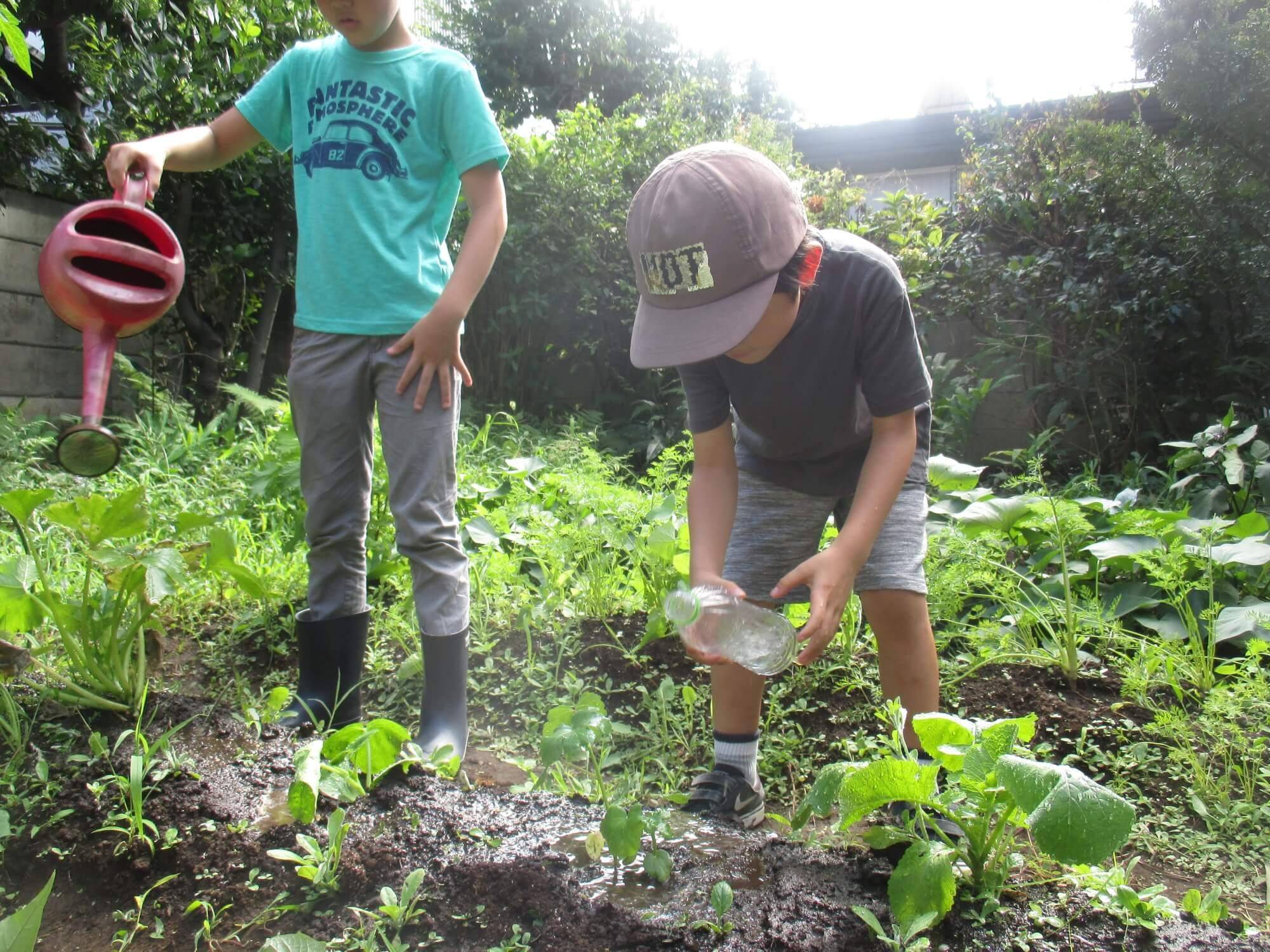 畑に水やりする子どもたち