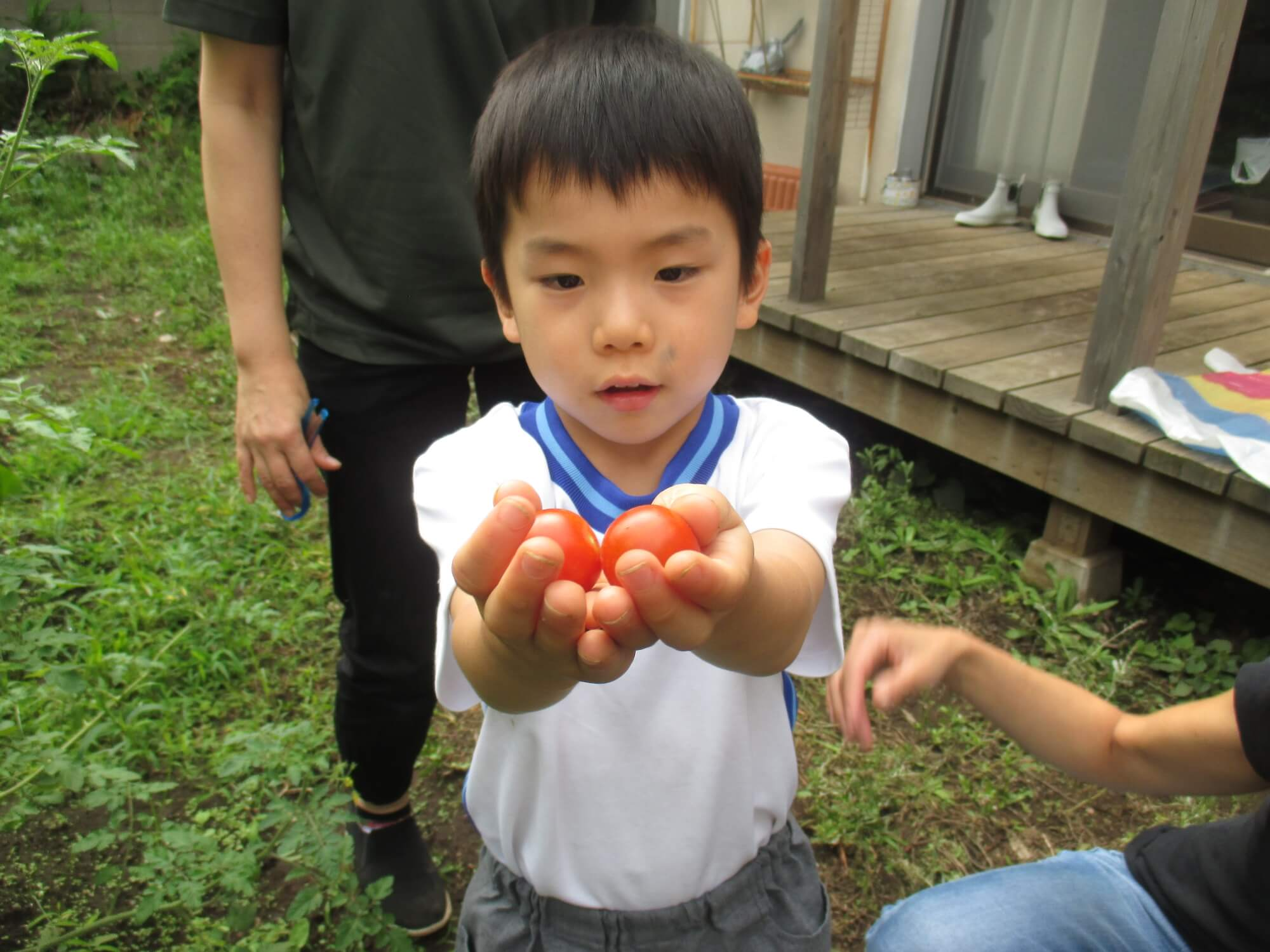 ミニトマトを見せる子ども