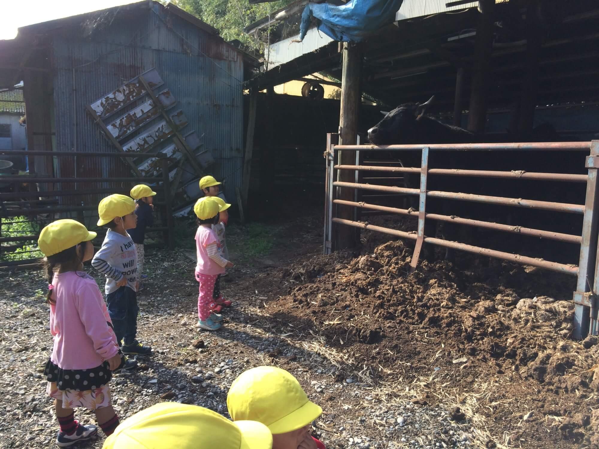 牛舎を見学する園児たち