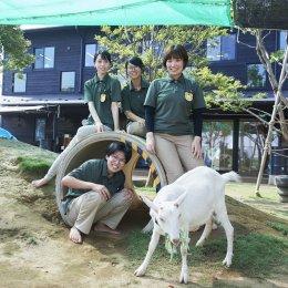 若手職員とヤギ