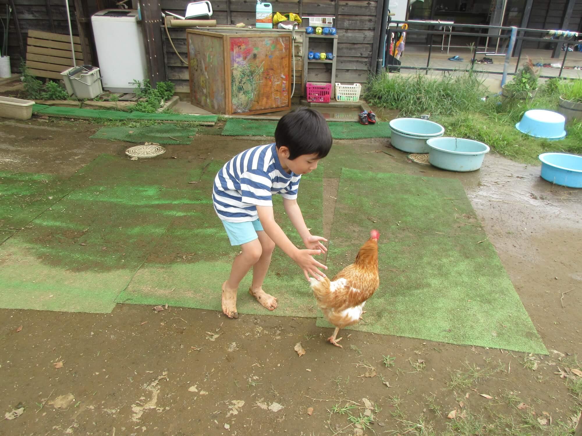鶏に触れる子ども