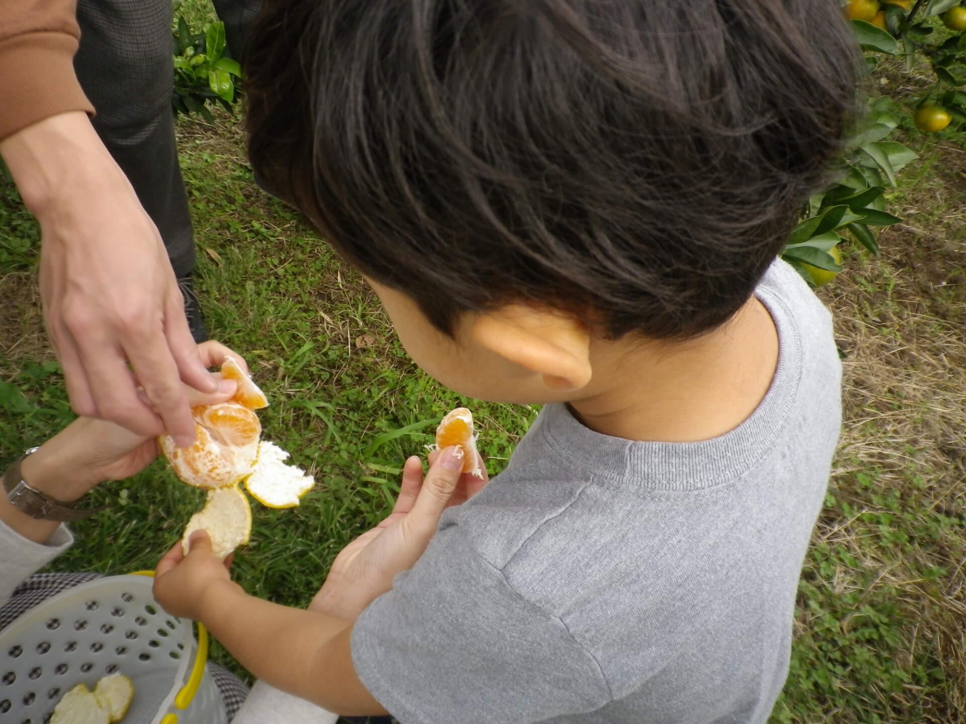 みかんを食べる子ども