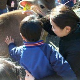 つむぎ荻窪ルーム「牧場体験‐牛に触れて楽しもう!」