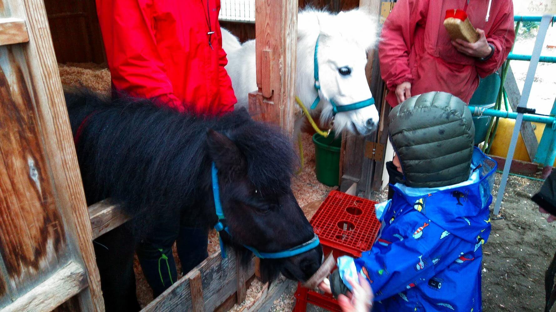 馬と触れ合う