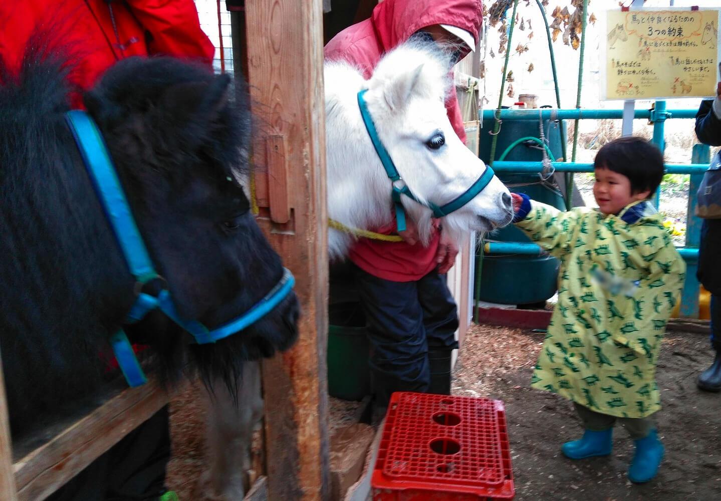 馬と触れ合う子ども