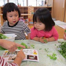 こどもぴあ保育園 神戸の「一粒の種から広がっていく体験」