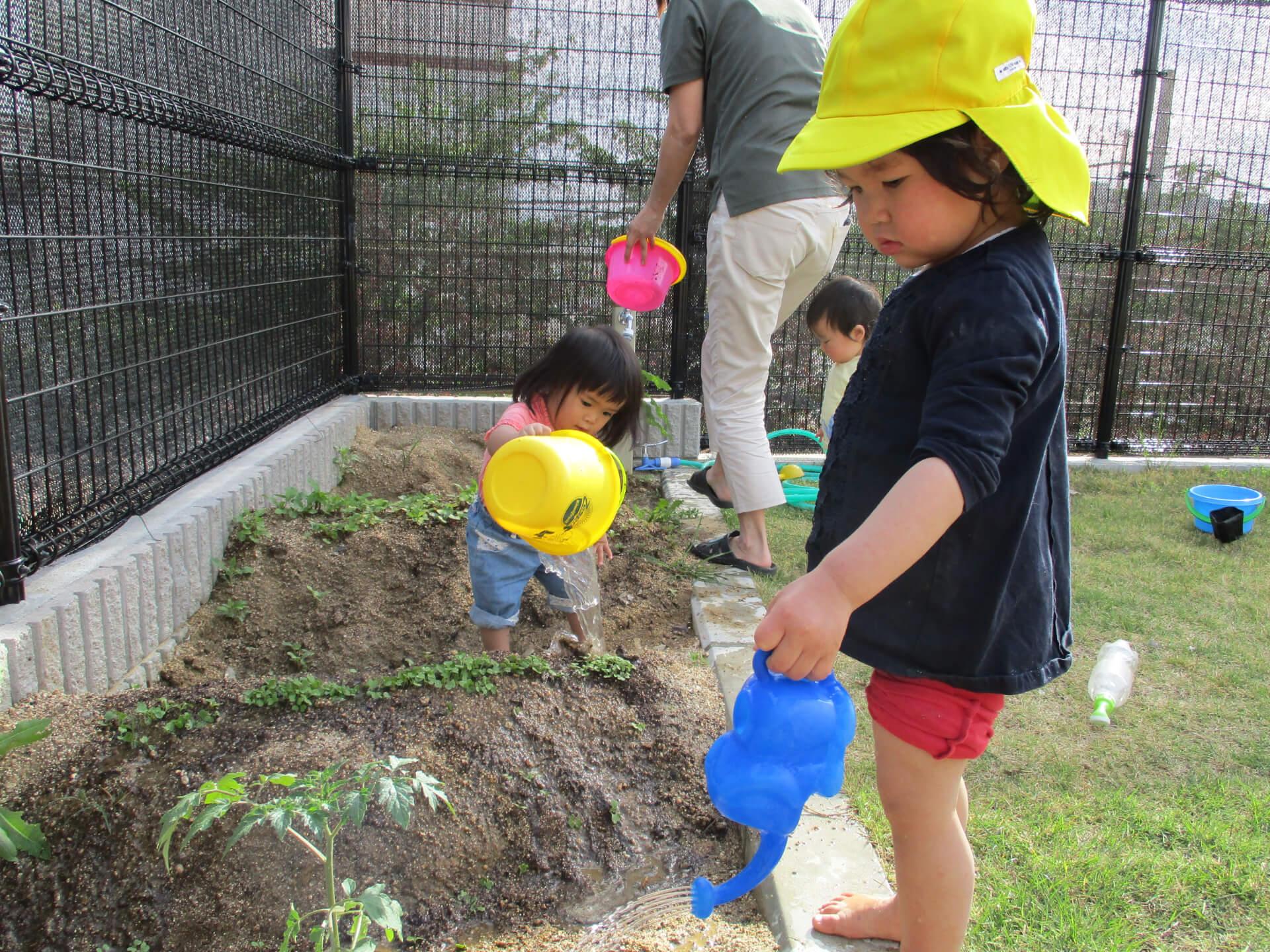 畑に水やりする子ども
