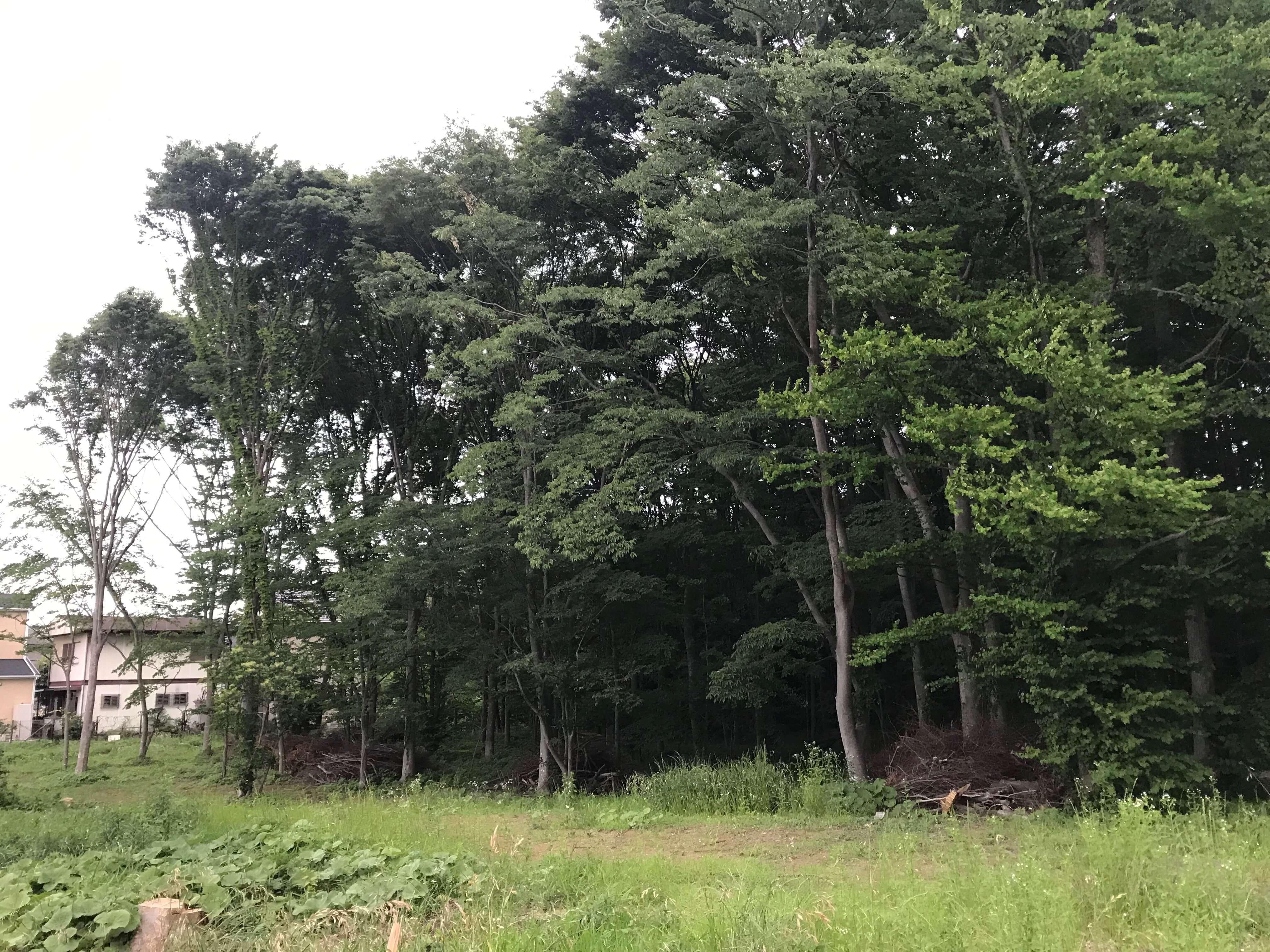 たくさんの木が生い茂っている守谷どろんこ保育園の建設予定地