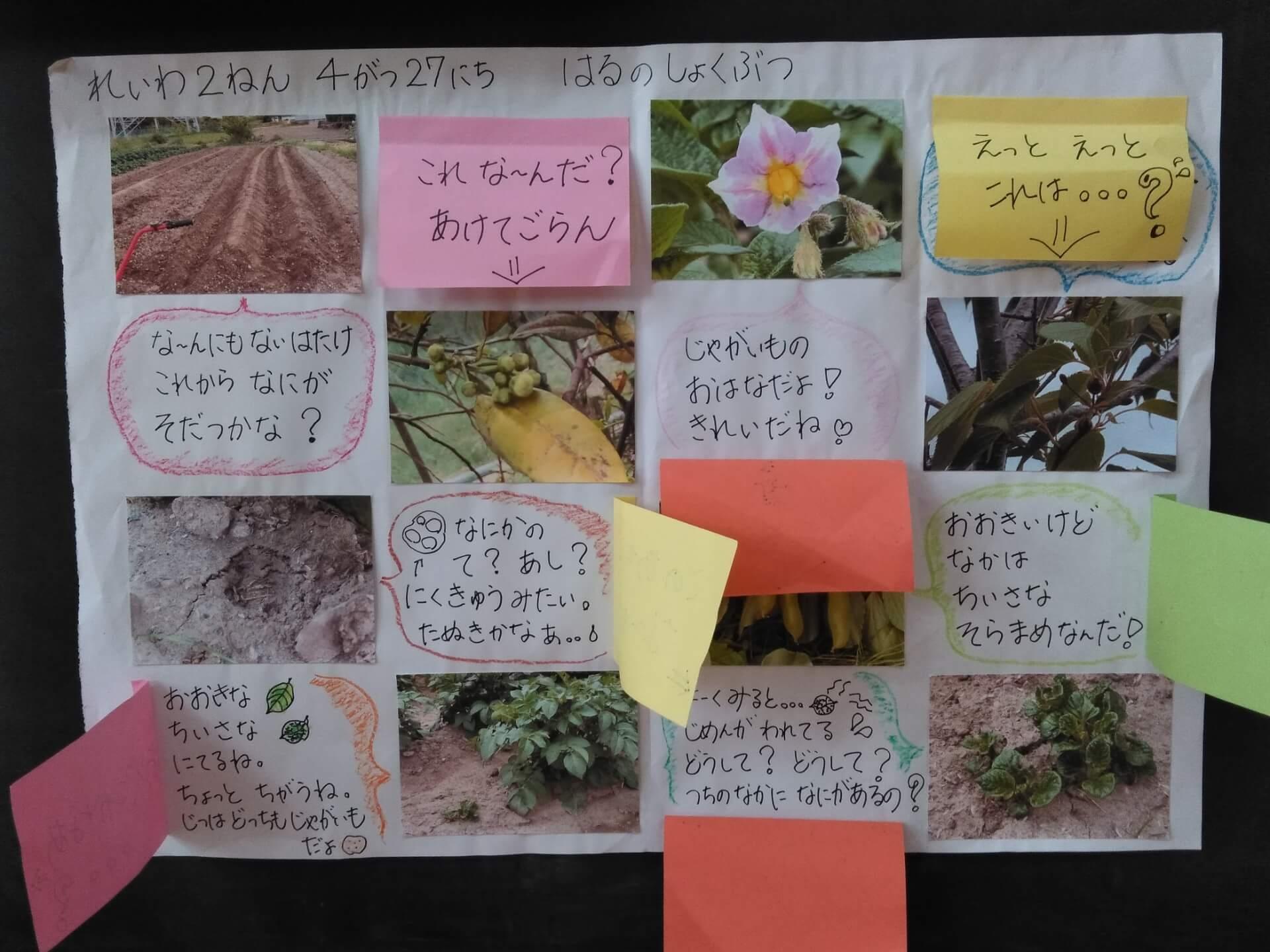 植物の情報掲示物