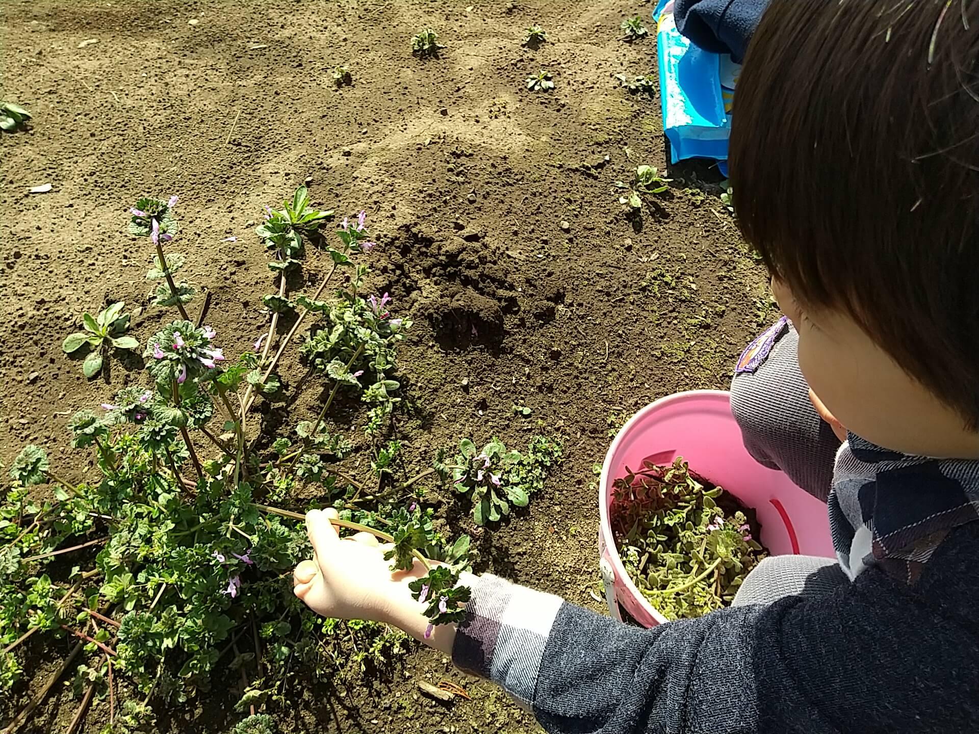 雑草を抜く子ども
