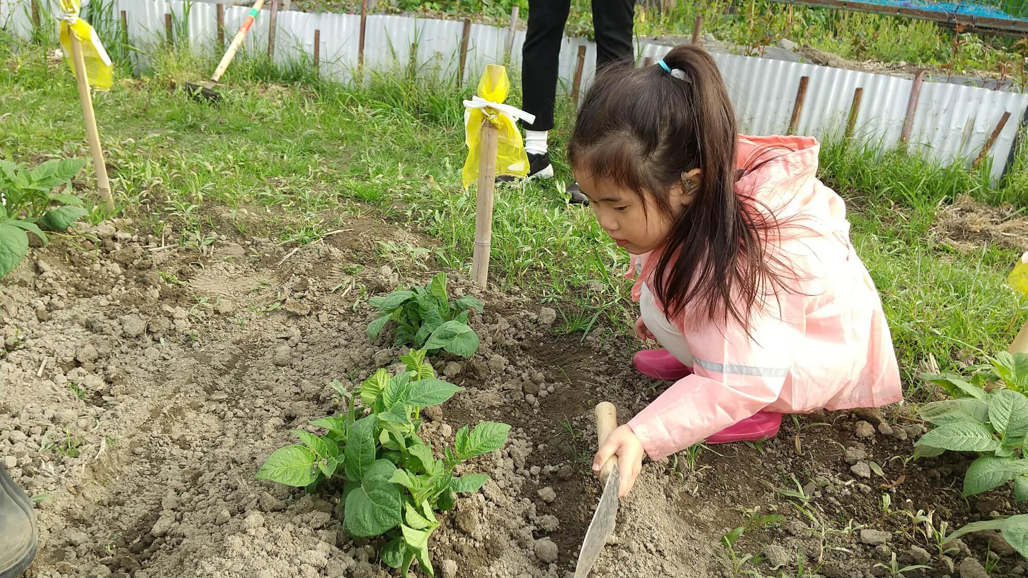 畑で土寄せをする子ども