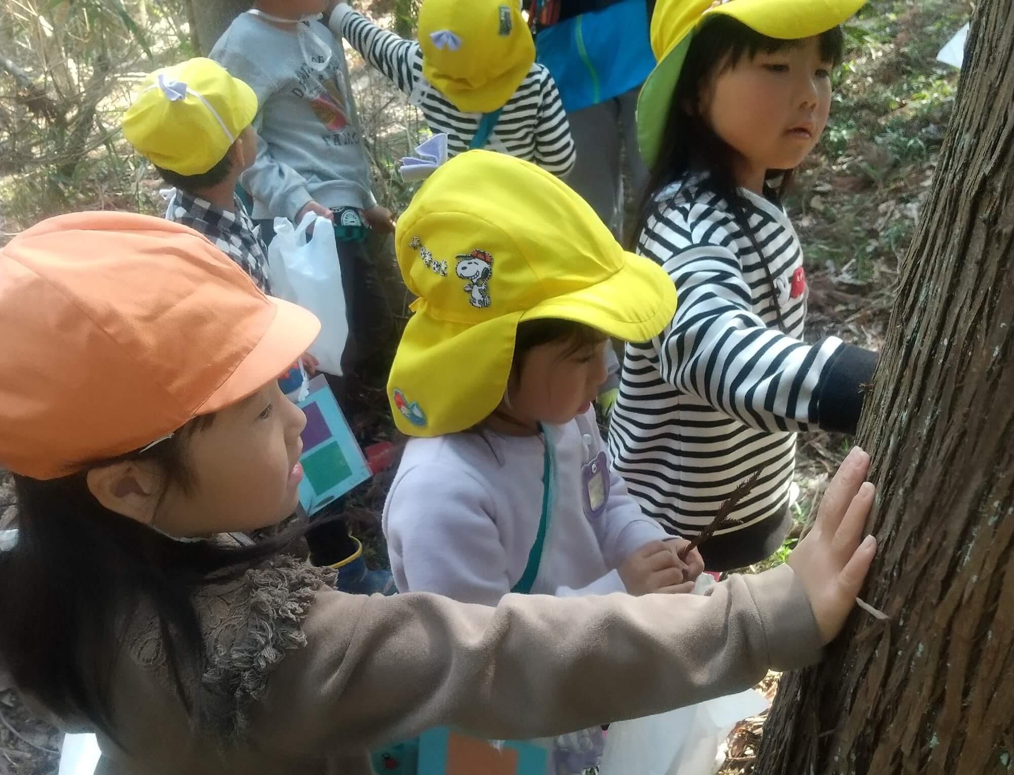 木の温度を調べる