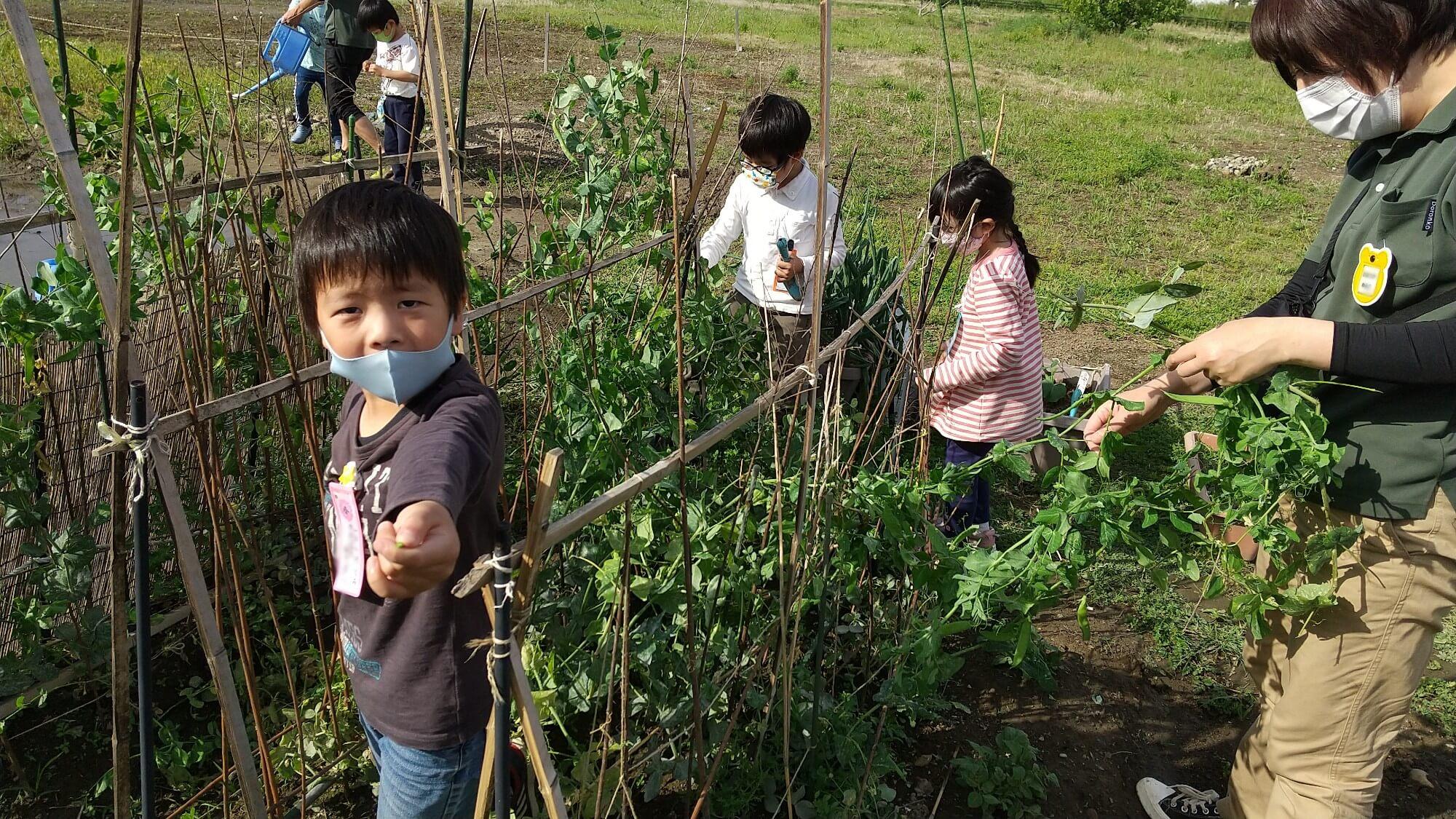 畑仕事をする子どもたち