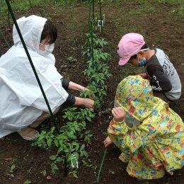 発達支援つむぎ 吉祥寺「雨の日の畑仕事」