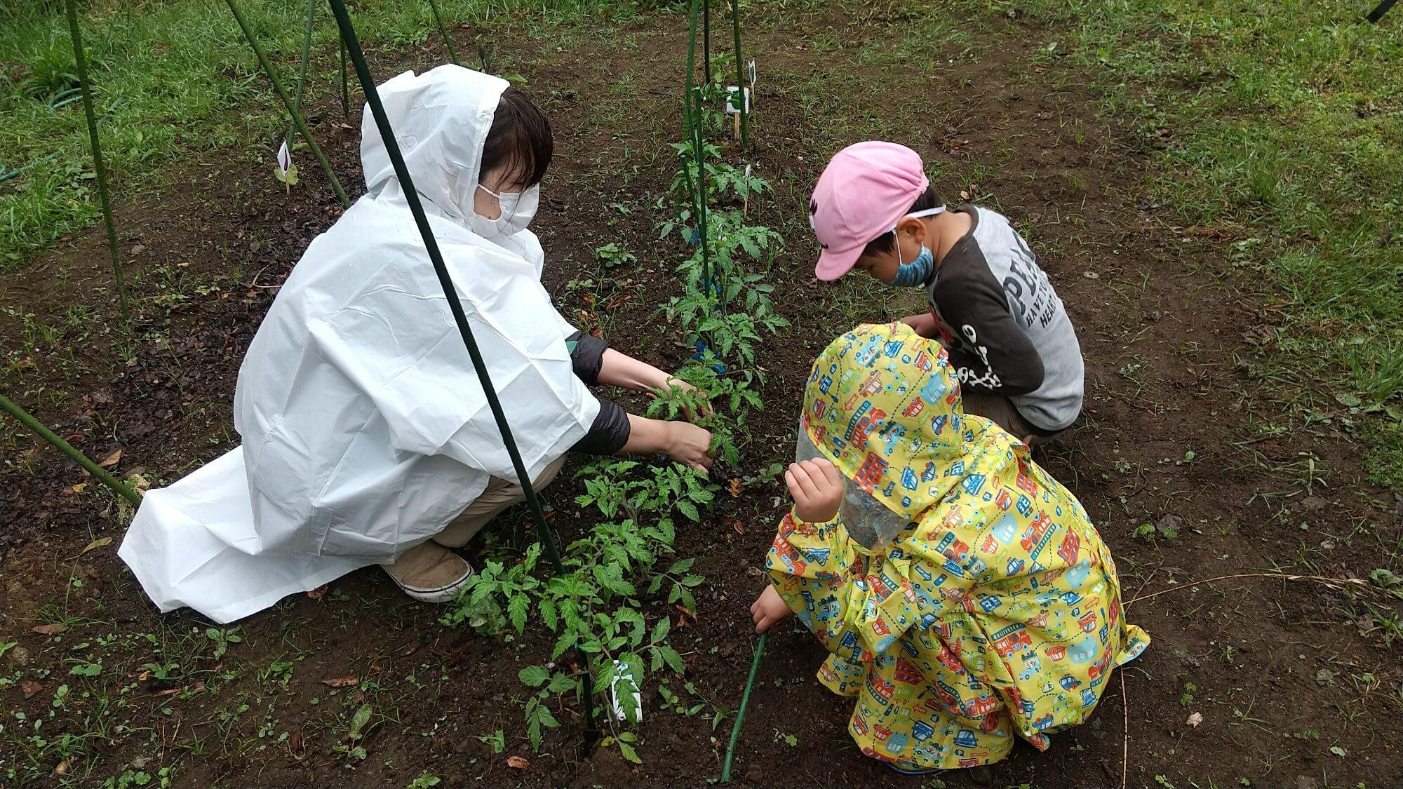 畑仕事中の子どもと職員