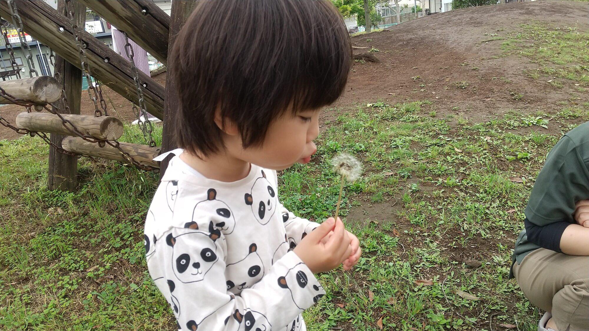 たんぽぽの綿毛で遊ぶ子ども