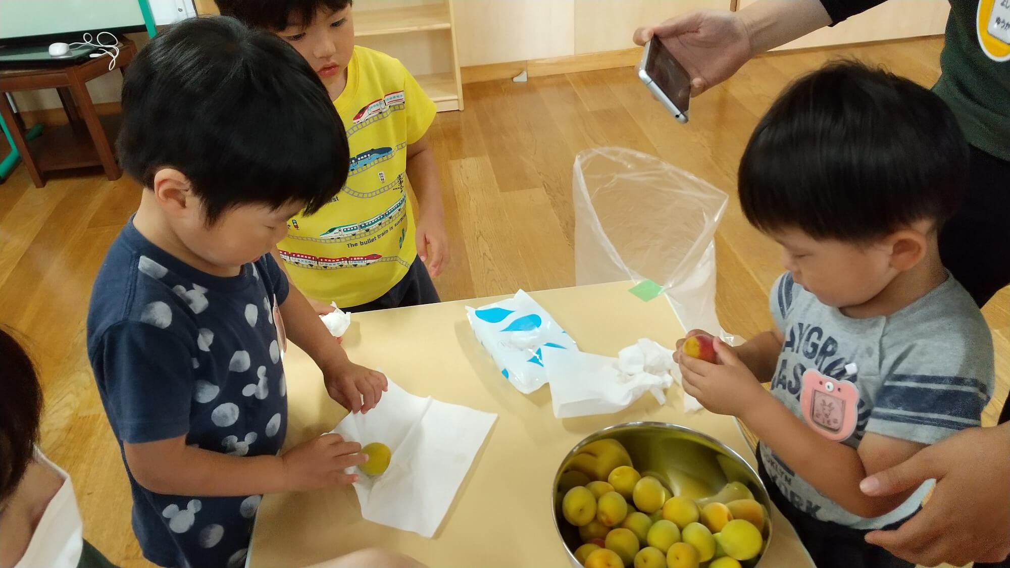 梅の実を丁寧に拭く子どもたち