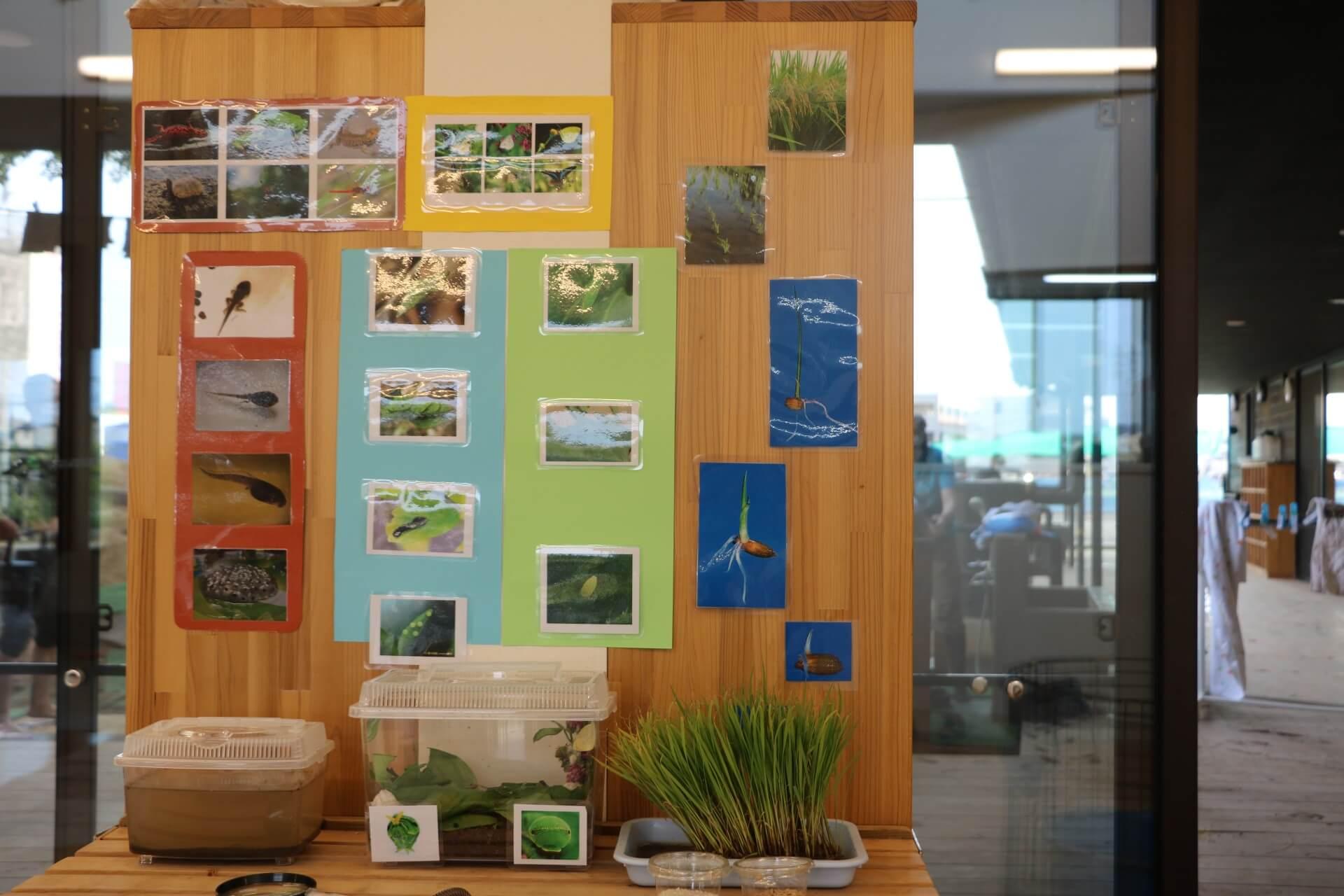 稲の成長を展示