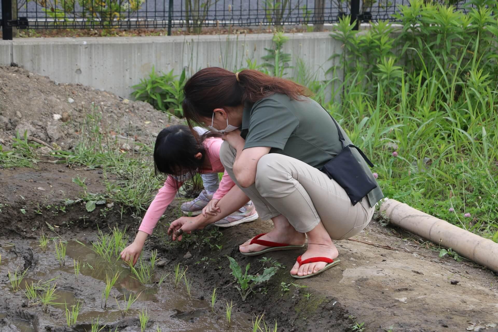 恐る恐る苗を植える子ども
