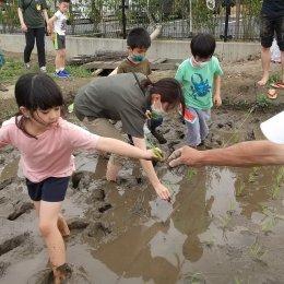 子ども発達支援センターつむぎ 浦和美園「田植えってこんなに楽しい!小学生の田んぼ仕事の姿」