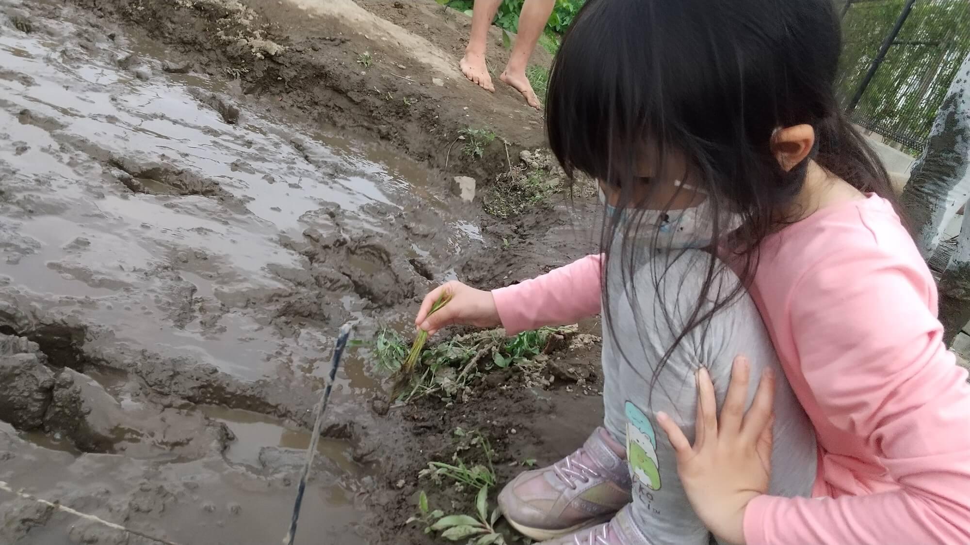 田んぼで遊ぶ子ども