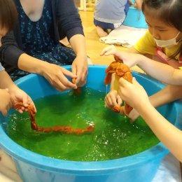 発達支援つむぎ 駒沢 6月体験学習「玉ねぎの皮でハンカチを染めよう」