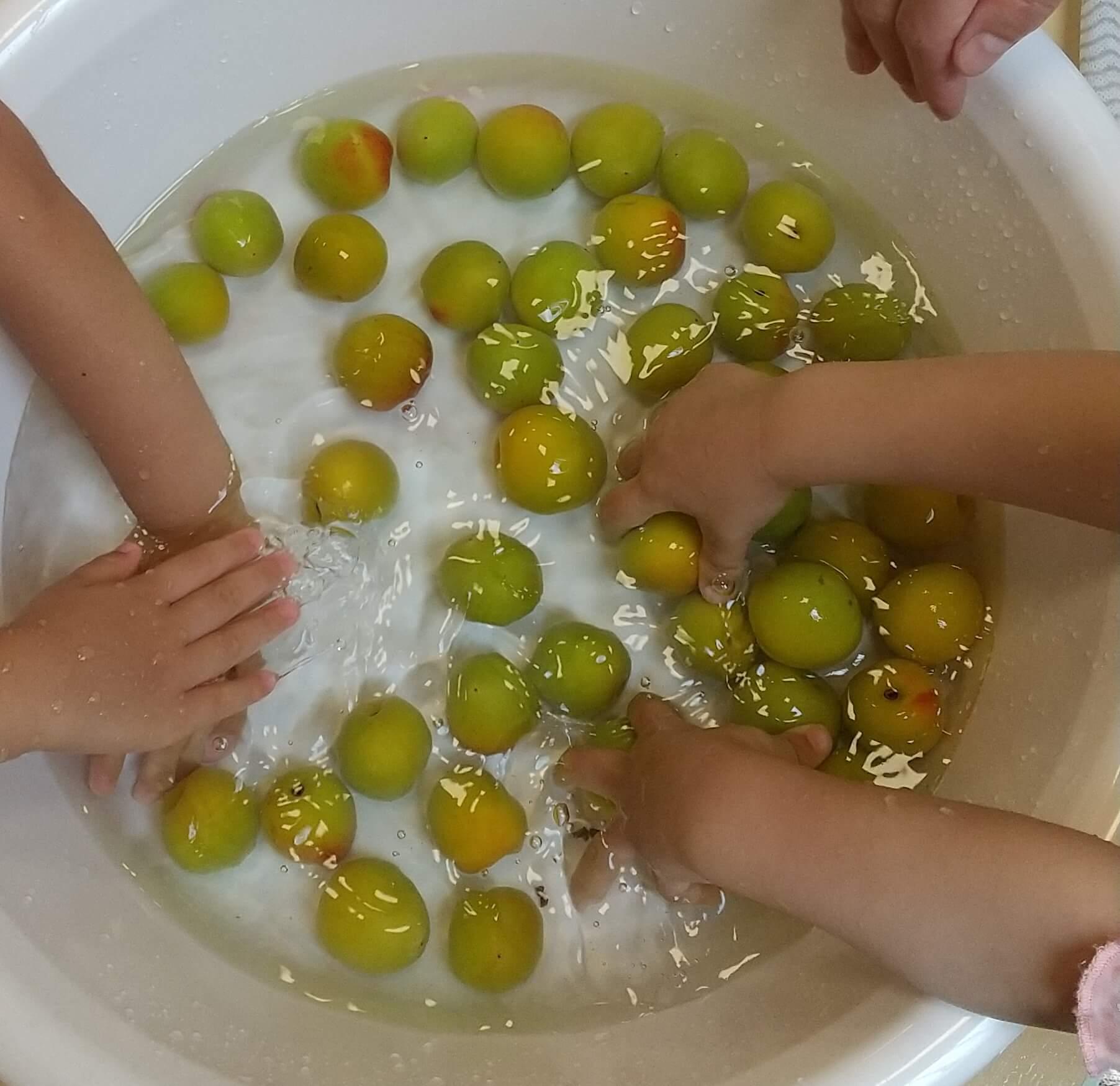 梅を洗う子どもたち
