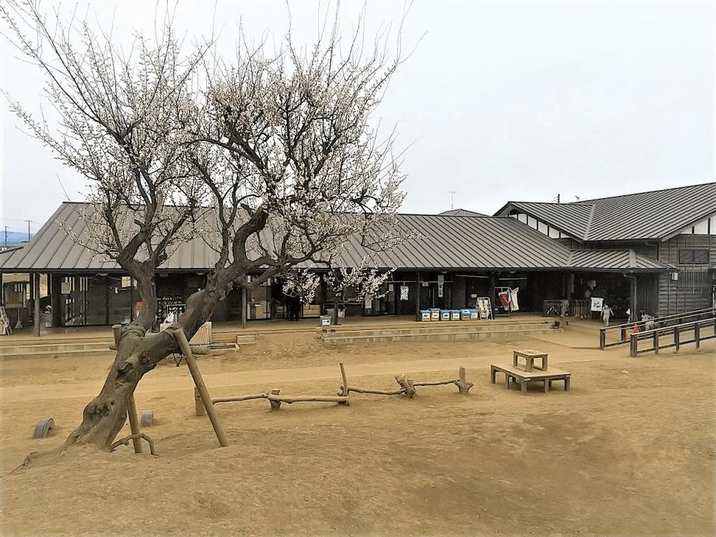 日高どろんこ保育園の園庭