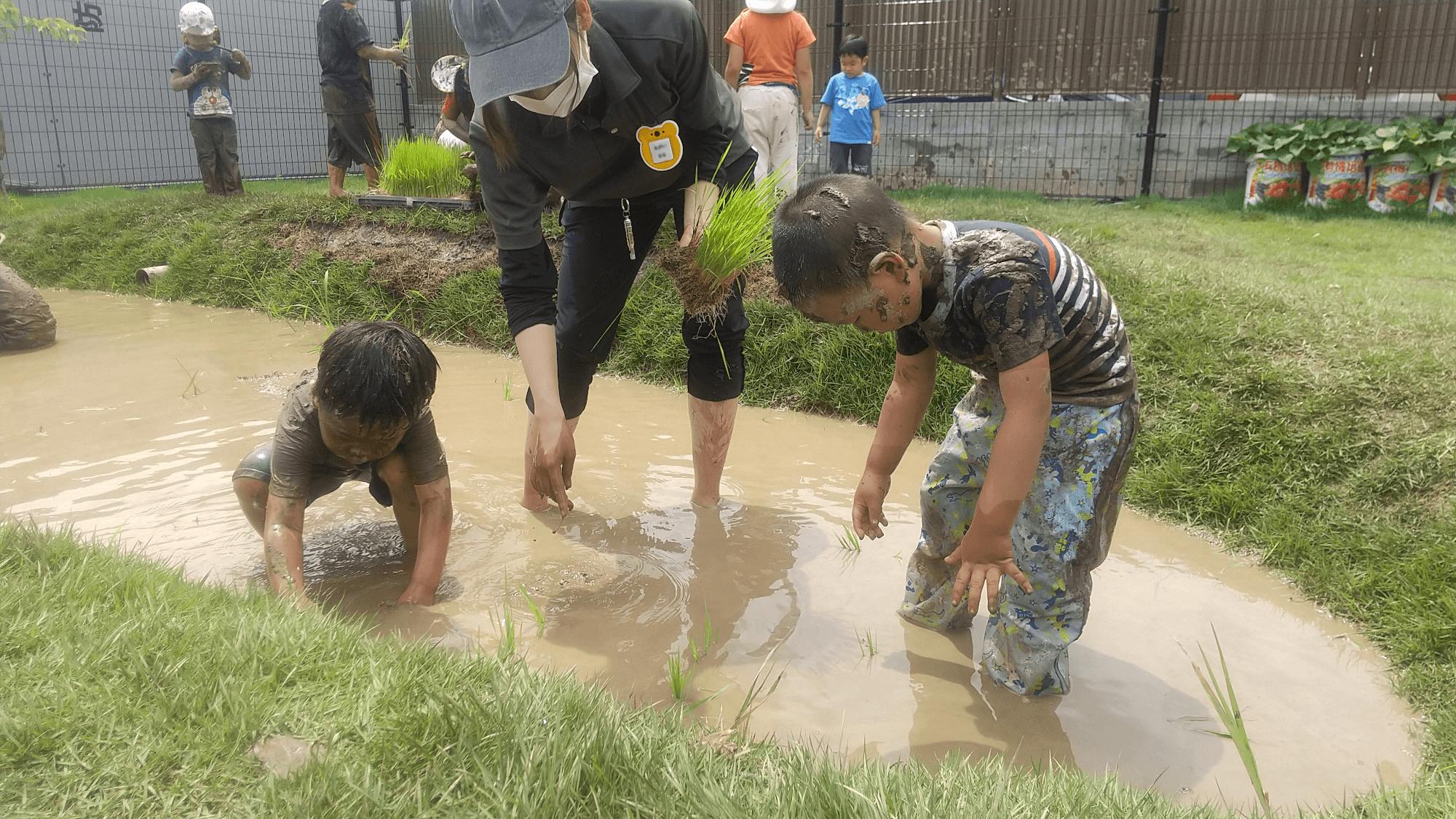 田植えに挑戦する子どもたち