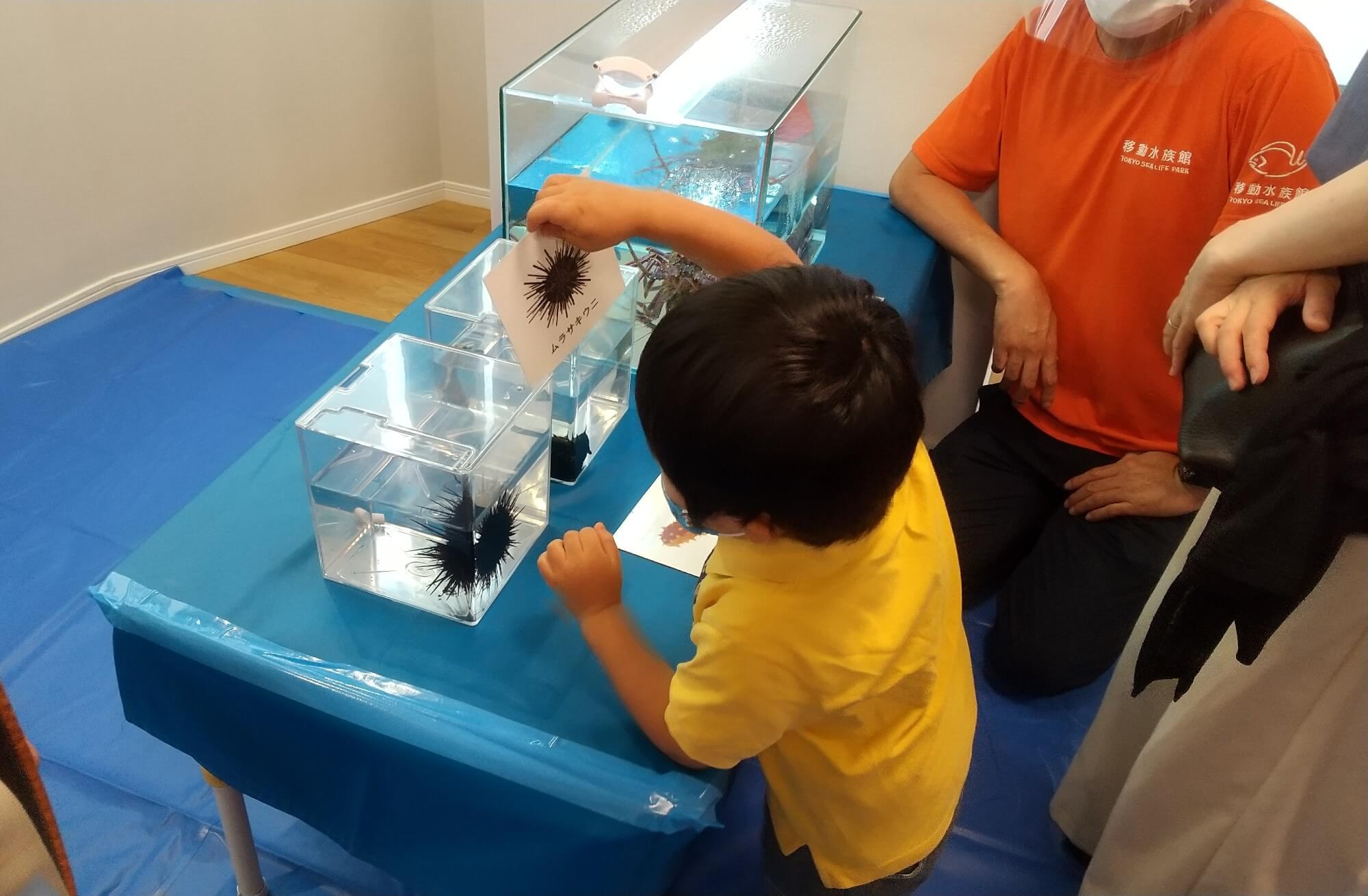 ウニの水槽