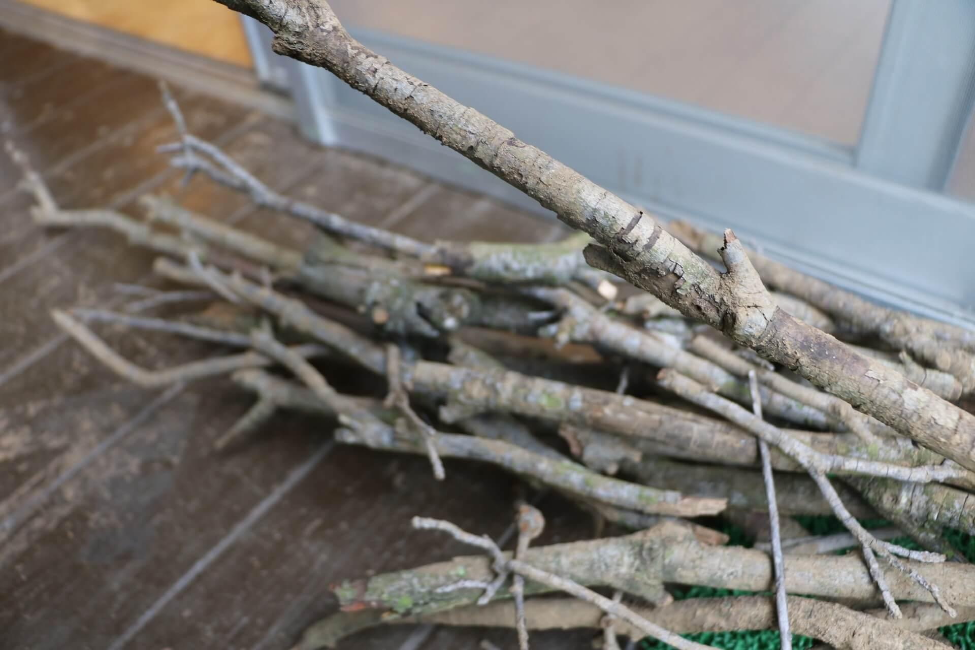 ヤマモモ、サクラなどたくさんの枝
