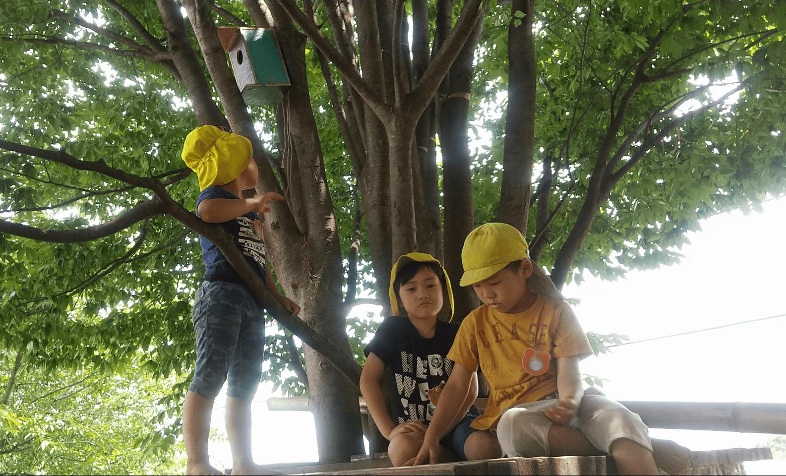 巣箱を高い木に設置