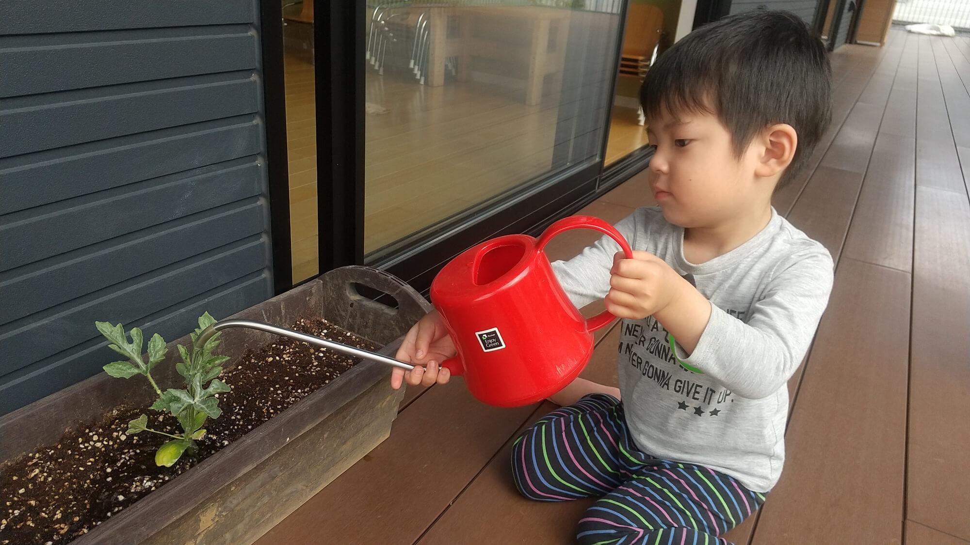 植物に水やりをする子ども