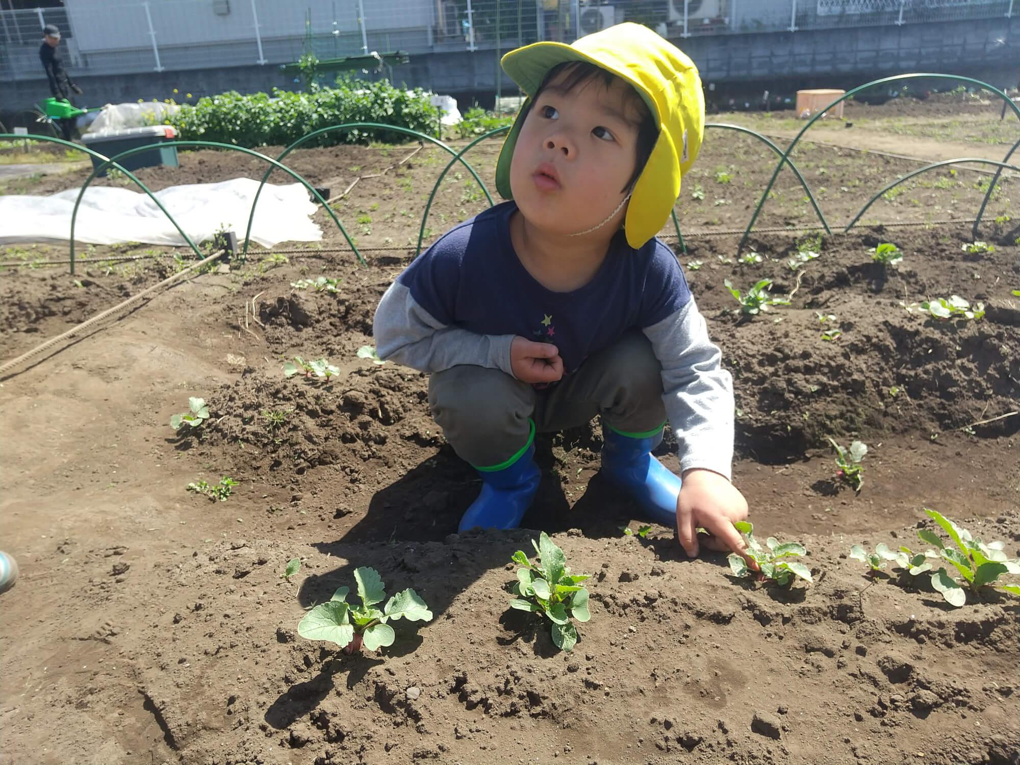 畑仕事をする子ども