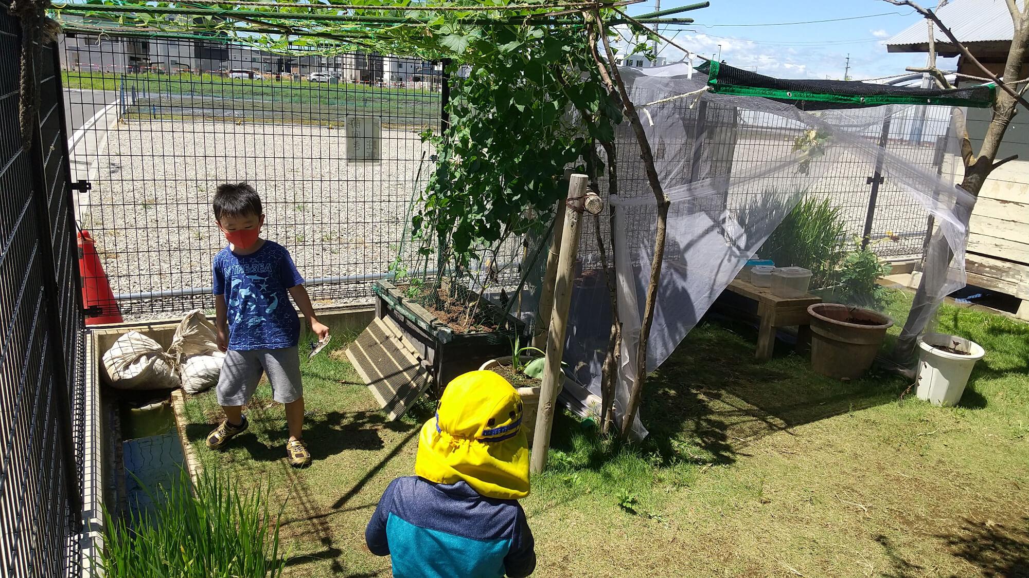 庭の虫ハウスで遊ぶ子ども