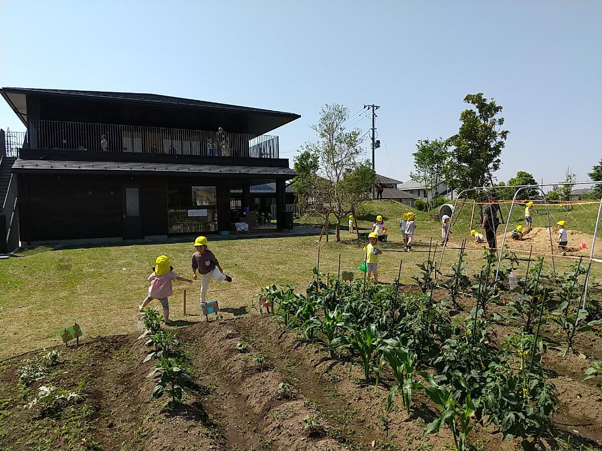 園庭での畑仕事